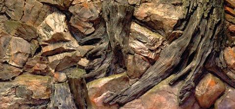 Pozadie AE Root  120 x 50 cm