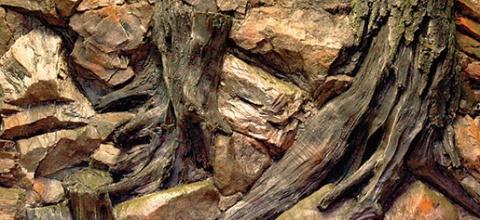 Pozadie AE Root  100 x 50 cm