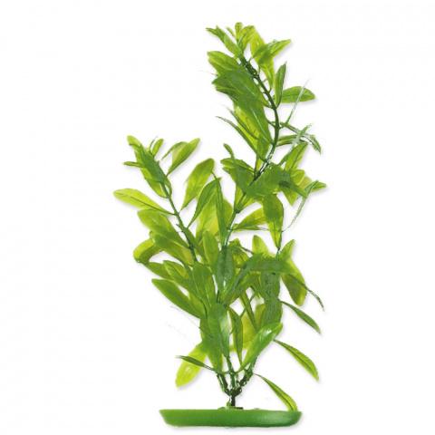 Rastlina 30cm Hygrophila /2503/ title=