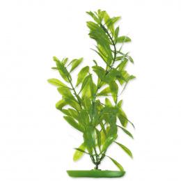Rastlina 30cm Hygrophila /2503/