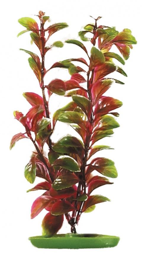 Rastlina MARINA Red Ludwigia 50 cm