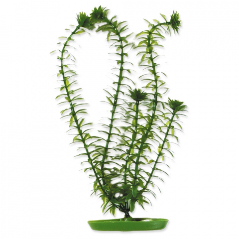 Rastlina 13cm Anacharis /2104/