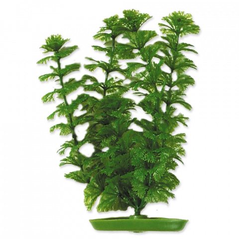 Rastlina 20cm Ambulia title=