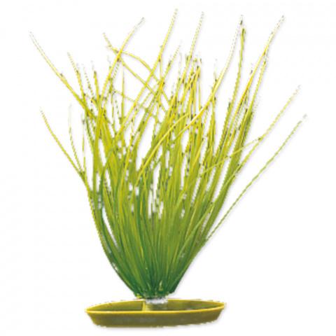 Rastlina 20cm Hairgrass