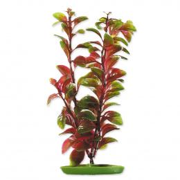 Rastlina 20cm Red Ludwigia