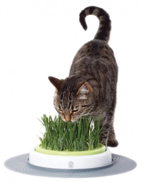 Trávnik CAT IT Design Senses