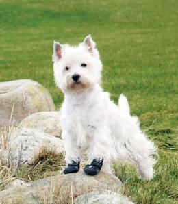 Topánky pre psy Trixie Walker Active čierne 2ks