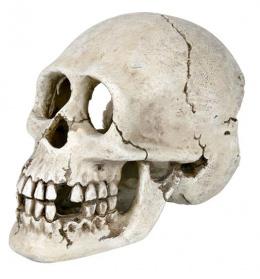 Dekoracia-Lebka, 15 cm