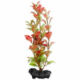 Rastlina Tetra Red Ludwigia S 15cm