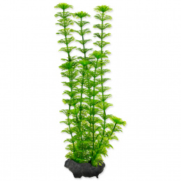 Rastlina Tetra Ambulia M 23cm