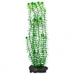 Rastlina Tetra Anacharis L 30cm