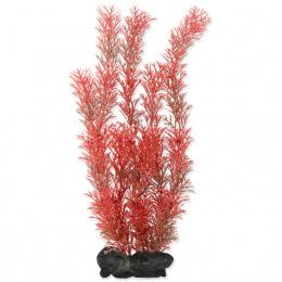 Rastlina Tetra Foxtail Red L 30cm