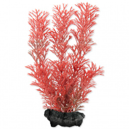 Rastlina Tetra Foxtail Red S 15cm