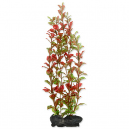 Rastlina Tetra Red Ludwigia L 30cm