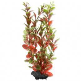 Rastlina Tetra Red Ludwigia M 23cm