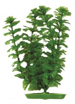 Rastlina 30cm Ambulia