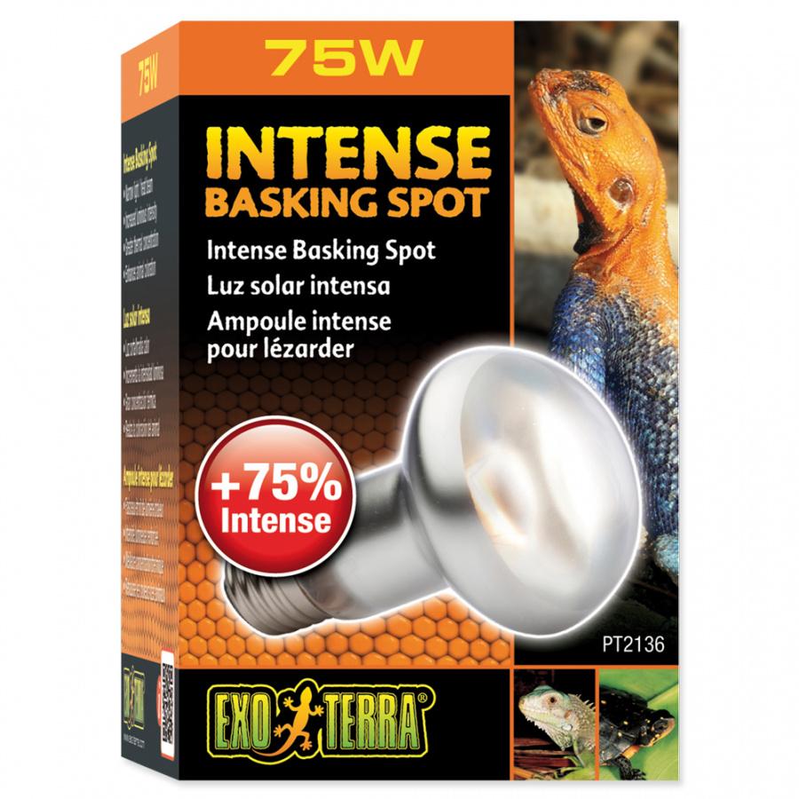 Ziarovka Intense Basking Spot 75W