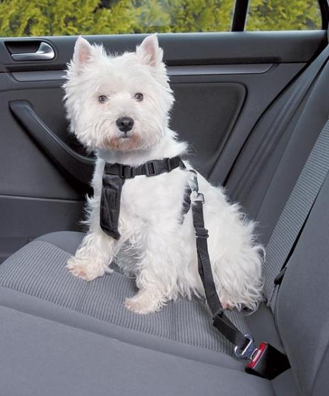 Postroj bezpečnostní pro psy do auta Trixie S 30-60cm černá title=