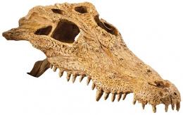 Dekorace EXO TERRA krokodýlí lebka