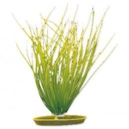 Rostlina Marina Hairgrass 20cm