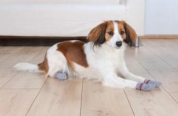 Ponožky pro psy Trixie S-M protiskluzové šedá 2ks