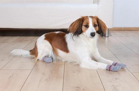 Ponožky pro psy Trixie L-XL protiskluzové šedé 2ks