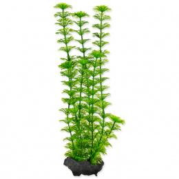 Rostlina Tetra Ambulia M 23cm