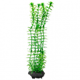 Rostlina Tetra Anacharis M 23cm