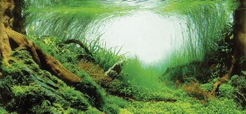Pozadí tapeta sladkovodní oboustranná 120×50cm