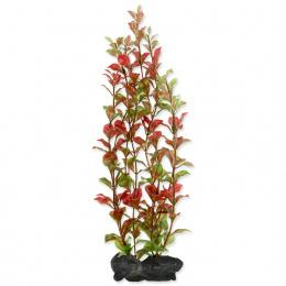 Rostlina Tetra Red Ludwigia L 30cm