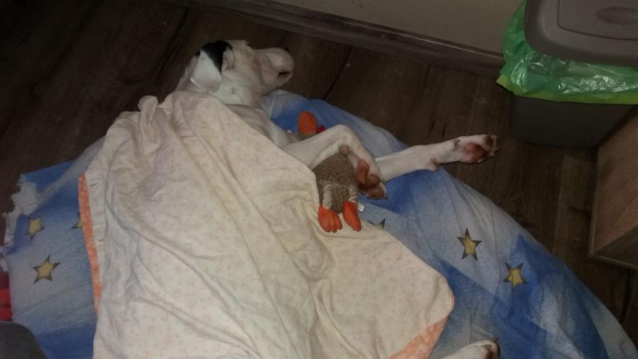 Hračka pro psy Trixie plyšový kohout 22cm