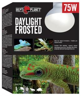 Repti Planet žárovka Daylight Frosted 75W