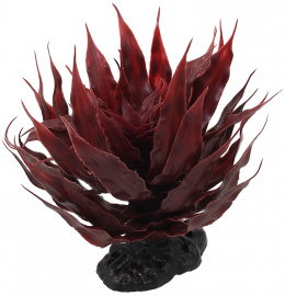 Rostlina Repti Planet sukulent Agave červená 18cm