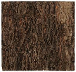 Repti Planet Pozadí korek přírodní 58,5x56cm