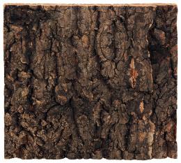Repti Planet Pozadí korek přírodní 19x17,3cm