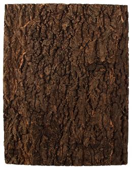 Repti Planet korkové pozadí přírodní 43,5x56cm