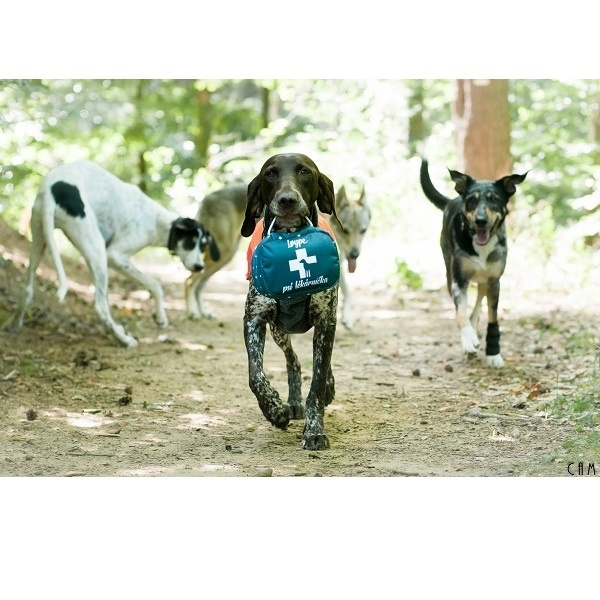 Lékárnička Loype pro psy L