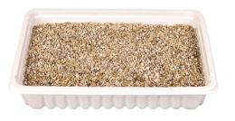 Трава для кошек - Trixie Katzengras 100 гр (блюдце)