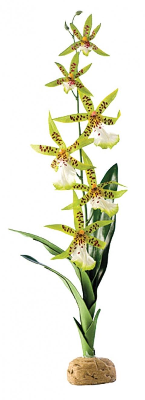 Декор для террариума - EXO TERRA Spider Orchid title=