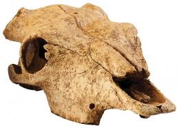 Декор для террариума - EXO TERRA череп бизона, размер XL