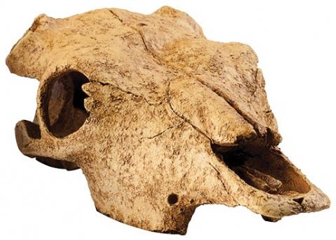 Dekors terārijam - EXO TERRA bizona galvaskauss, XL izmērs