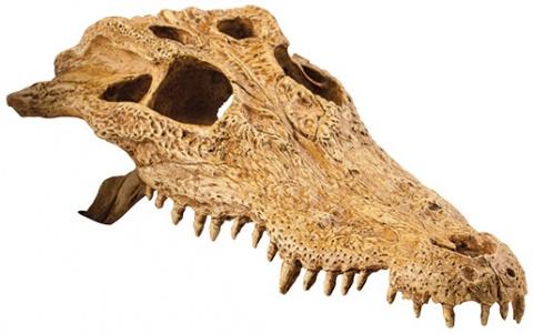 Декор для террариума - EXO TERRA череп крокодила