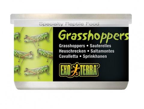 Barība reptiļiem - ExoTerra Grasshoppers 34g title=