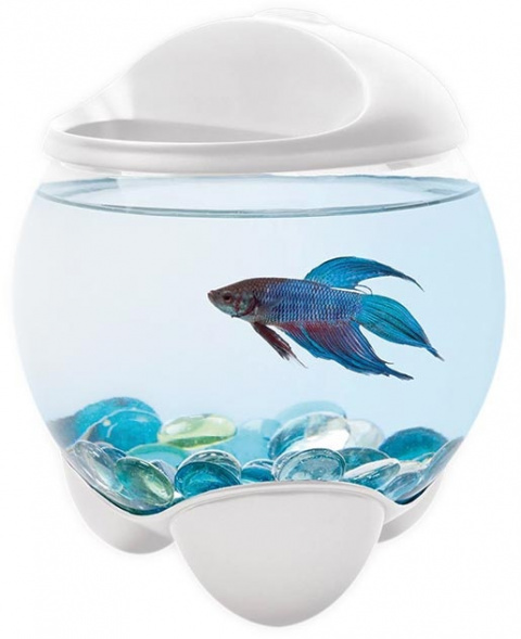 Akvārijs - Tetra Betta Bubble, 1.8l, balts
