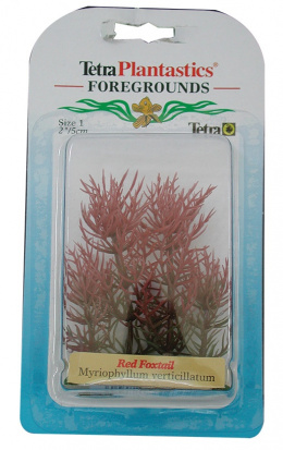 Dekoratīvs augs - Red Foxtall XXS