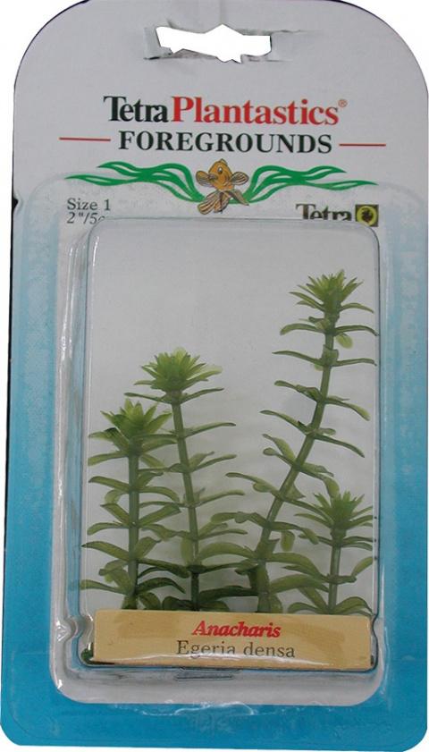 Dekoratīvs augs akvārijam - Anacharis Nr.1