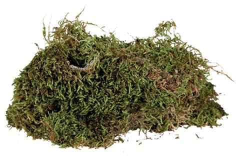 Мох для террариума - Terrarium moss Trixie, 200 гр title=