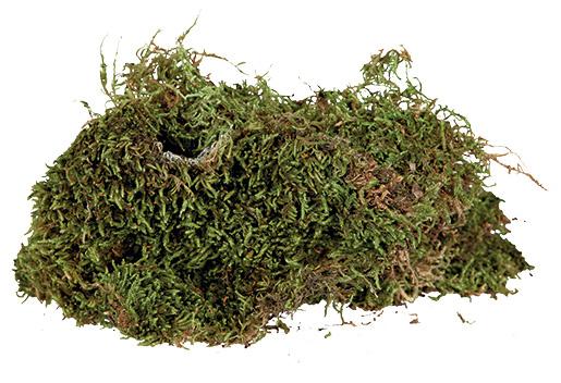 Substrāts terārijam  - Trixie, Terrarium moss, sūnas, 200 g