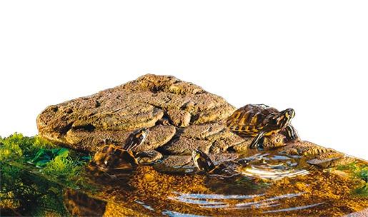 Декор для террариума - ExoTerra Turtle Island medium