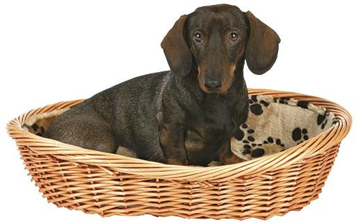 Guļvieta suņiem - Dog Basket, 80cm, bēša krāsa